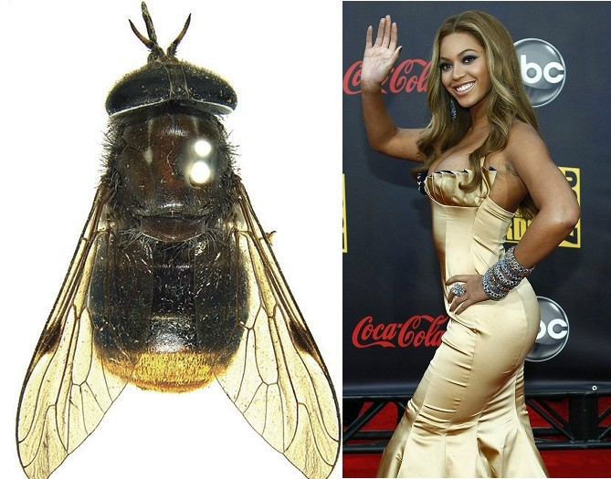 beyonce fly