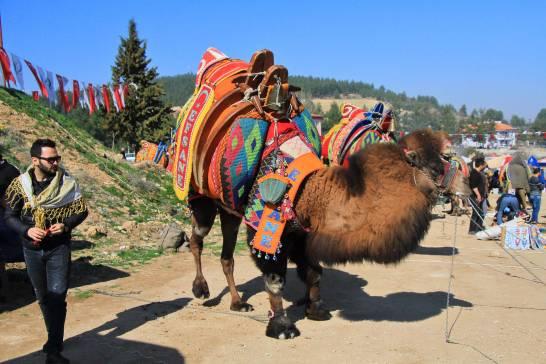 camelsIMG_6688_copy_copy