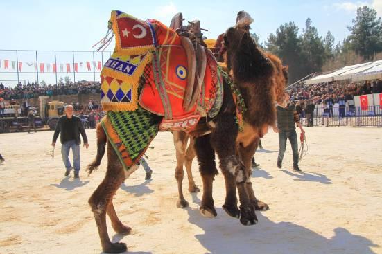 camelsIMG_6735_copy_copy