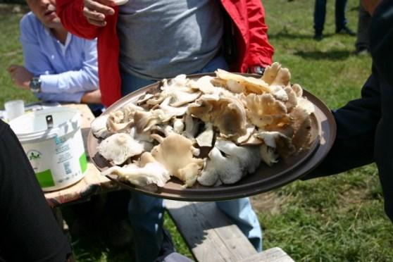 fungi-feast