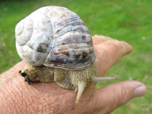 snail3_1