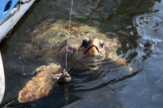 turtle-baiting-travbuddy