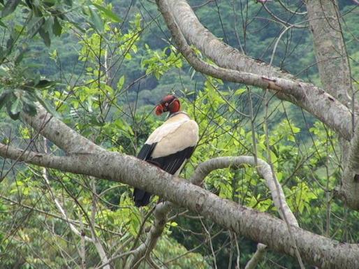 vulture_1