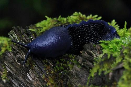 slug6
