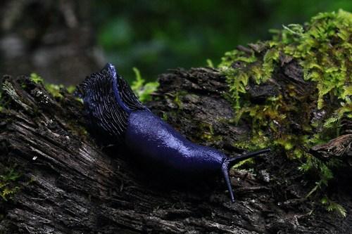 slug7